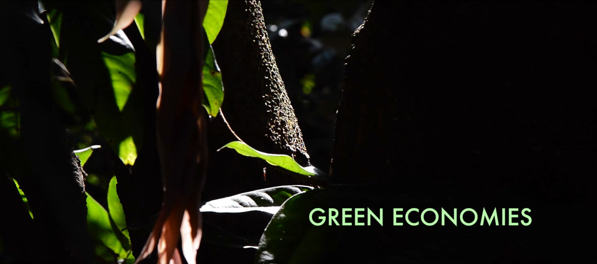 Green Economies